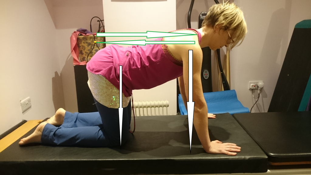 All 4 position in Pilates annotated to show direction of force transmission